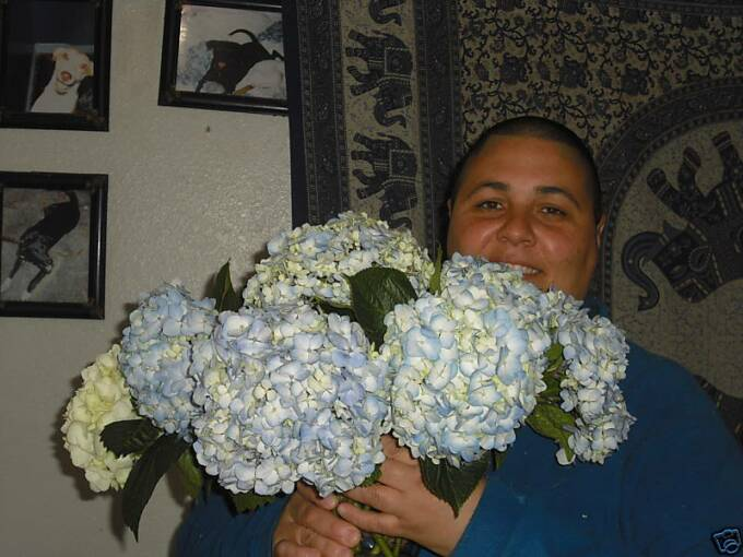 blue hydrangeas mario the flowerman